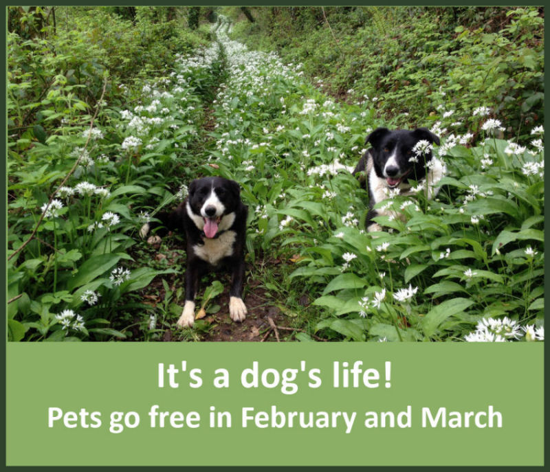 Pets go free in February and March